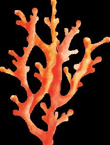 Illustration graphique gorgone, création Sextant Marseille